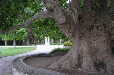 az év fája, természet, verseny