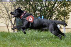 életmentő, kutya, magyar, verseny