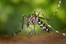 fertőző betegség, klímaváltozás, trópusi betegség