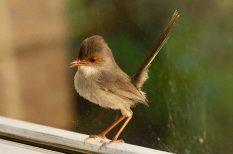 madár, természet, verseny