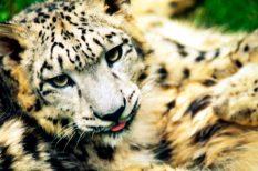 állatvédelem, érdekességek, földrengés, gps, természet