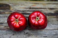 alma, Gyümölcsleves, leves