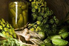 fokhagyma, kapor, kovászos uborka, recept, uborka