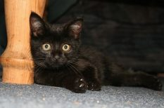 13-as szám, babona, fekete macska, hiedelem, utazás
