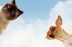 chip, kutya, macska, nagy-britannia, Petíció
