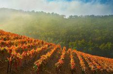 bor, egészséges, minőség, olaszország, vizsgálat
