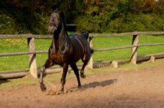 allergia, engedély nélkül, ló, NÉBIH, tiltott szer