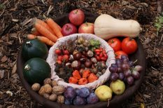 egészség, koleszterin, orvos, sport étkezés, tanács