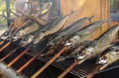 füstölés, gasztronómia, hal, konyha, otthon