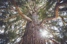 az év fája, szavazás, természet