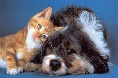 csontok ősmaradványok állatvilág, ellentét, kutatás, kutya, macska, tudomány