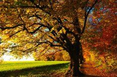 erdészek, erdő, magyarország, programok