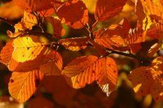 arcápolás, hidratálás, kozmetikai kezelés, mélyhámlasztás, ősz