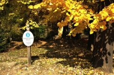 Botanikus Kert, erdő, kiorándulás, nyövényi ritkaságok, ősz, PTE