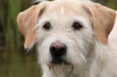 állatvédelem, felelős állattartás, gyerekek, kutya, örökbefogadás