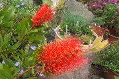 Botanikus Kert, cserje, kefevirág, orchidea, PTE