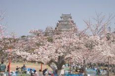 anime, cseresznyevirágzás, japán, Tokió, utazás