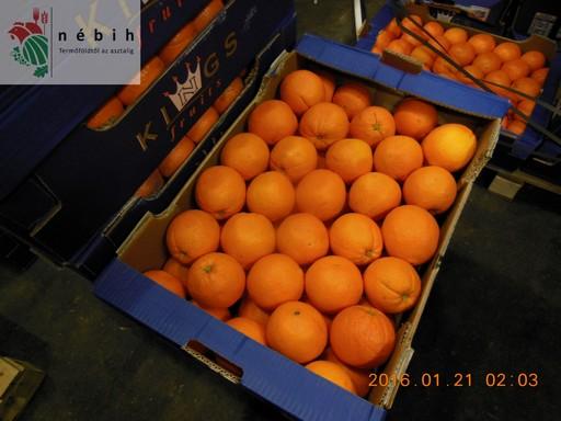 A Nagybani ellenorzésén lefoglalt narancs, Kép: NÉBIH