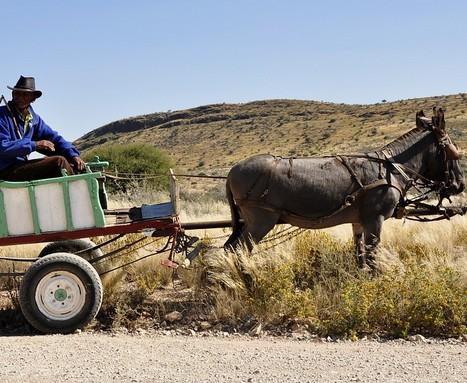 Szamárkordé Namíbiában, Kép: pixabay
