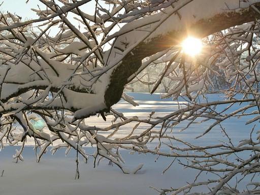 Téli erdő ágai közt átsütő napfény, Kép: pixabay