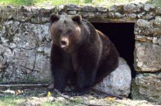 árnyékészlelés, brummogás, fesztivál, Fővárosi Állat- és Növénykert, medve, programok