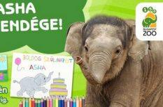 Asha, Bálint-nap, csók, elefántborjú, Fővárosi Állat- és Növénykert, gyerekek, szerelmespár