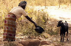 Afrika, éhínség, FAO, kényszermigráció, szárazság