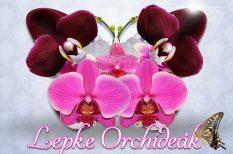kiállítás, orchideakiállítás, program, tavasz, vajdahunyadvár