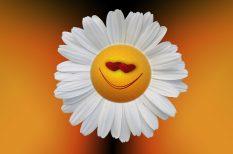 boldogság, hála, lélek, megbocsátás, optimizmus, szorongás