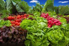 káposzta, megelőzés, nitrát, spenót, szem, szűrés, zöldhályog, zöldség