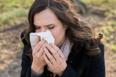 bodorrózsa, egészség, gyógynövény, immunrendszer, tea