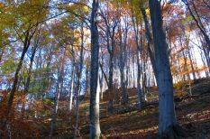 erdő, fakitermelés, magyarország, természetvédelem