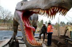 állatkert, dinoszauruszok, program, Veszprém