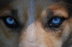 állatvédelem, érdekesség, farkas, hiúz, videó