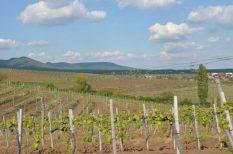 Abasár, bor, Borrendelő, Mária-út, Mátra, olaszrizling, pince, szőlő