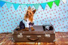 Európai Unió, házi kedvencek, kutya, macska, nyaralás, szabályok, utazás