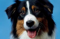 állatorvosi tanács, halálos betegség, kutya, macska, megelőzés, szívférek, szúnyog