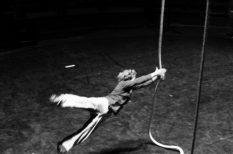 cirkusz, előadás, műsor, mutatvány, programajánló, Trafó