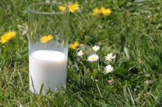 cukorbetegség, fehérje, tej, zsírsavak