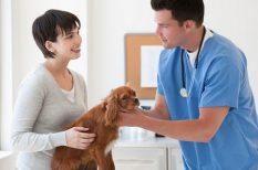 betegség, felelős állattartás, kutya, megelőzés, szívférgesség