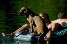 állat, ápolás, árnyék, hőség, ivóvíz, kánikula, kutya, rosszullét