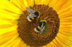 allergia, bőrproblémák, kalcium, méh és darázscsípések, nyár