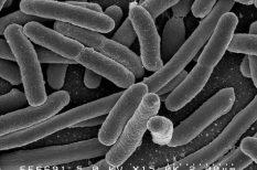 amyagcsere, baktériumok, evolúció, magyar siker, MTA, tudomány, ugródeszka-enzim