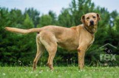 alapítvány, állat, budapest, esemény, ivartalanítás. kutyakozmetika, kutya, örökbefogadás