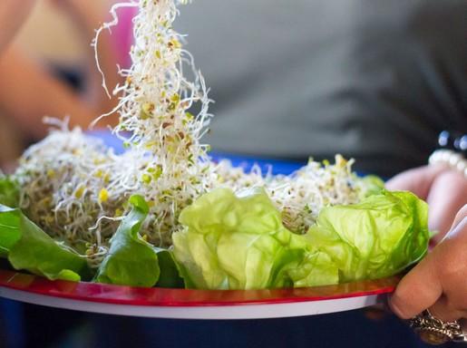 Vegatál csírákkal, Kép: sajtóanyag
