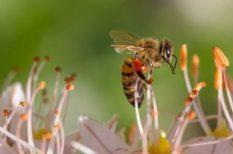 allergia, ecet, méh és darázscsípések, méreg, szódabikarbóna, szúnyog