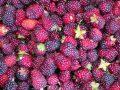 egészség, fehérje, gyümölcs, rost, táplálkozás, tervezés