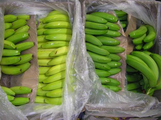 Banánok érlelés előtt, után, Kép: László Márta