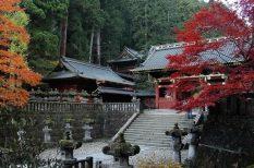 élmény, japán, ősz, turizmus, utazás