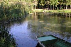 európai természeti ritkaság, kirándulás, környezetvédelem, Örvény-tó, pápa, patak, Tapolcafő